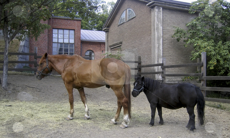 Horse and pony stock photo, A brown horse and a black pony by Alessandro Rizzolli