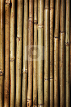 Bamboo stock photo,  by Mikhail Egorov