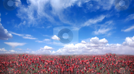 Beautiful Countryside in America stock photo, Beautiful Countryside in America of Flowers and Bright Blue Sky by Katrina Brown