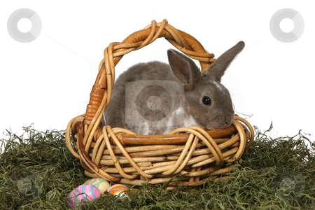 Cute Grey Rabbit in a Wicker Basket stock photo, Cute Grey Rabbit in a Basket With Easter Eggs by Katrina Brown