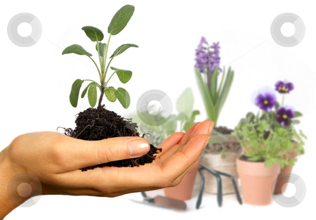 Colorful Spring Flowers in Pots stock photo, Colorful Spring Flowers in Pots and in Hand by Katrina Brown