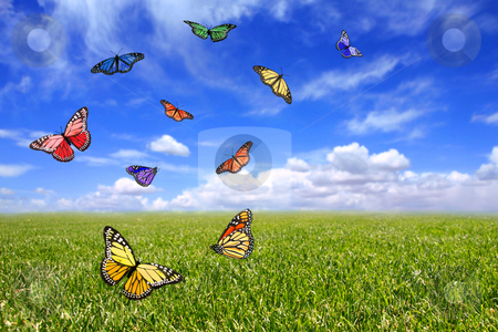 Beautiful Butterflies Flying Free in an Open Field stock photo, Beautiful Butterflies Flying Free in an Open Field of Grass and Sky by Katrina Brown