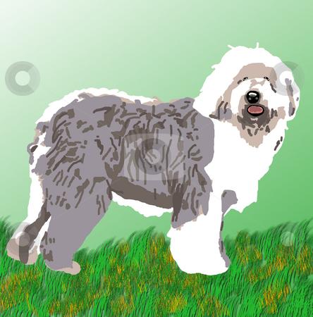 Sheepdog Standing stock photo, Sheepdog standing on alert on a grassy field. by Karen Carter