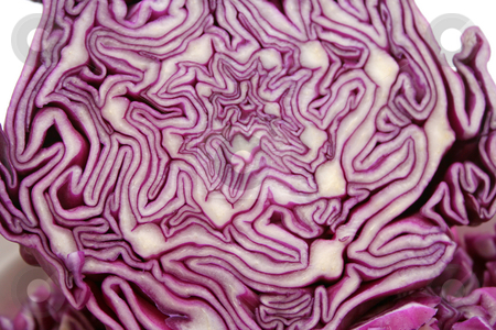 Red cabbage stock photo, Red Cabbage by Yvonne Bogdanski