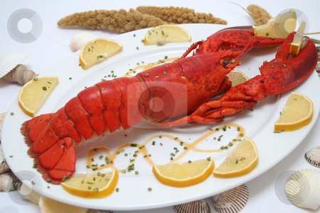 A lobster stock photo, A lobster by Yvonne Bogdanski