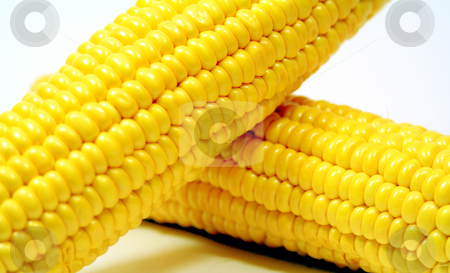 Corn stock photo, Corn by Yvonne Bogdanski