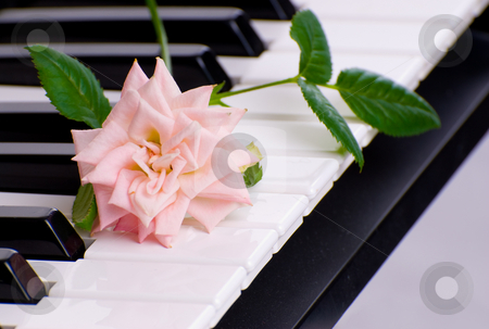 Love Of Music stock photo, A pink rose lying on the keys of an electronic piano by Richard Nelson
