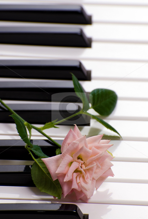 Piano With Rose stock photo, Closeup view of a piano with a rose resting on the keys by Richard Nelson