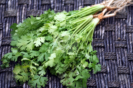 Fresh coriander stock photo,  by Yvonne Bogdanski