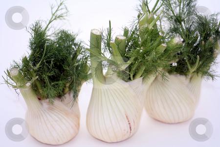 Fresh fennel stock photo,  by Yvonne Bogdanski