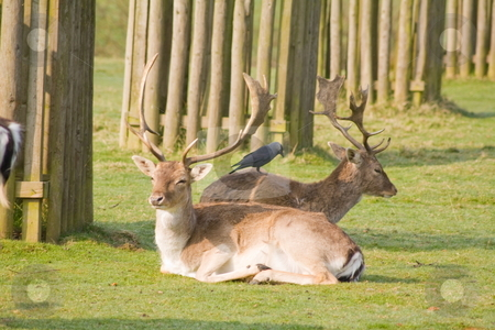 Deer stock photo, Deer in a wood land park by Stephen Mcnally