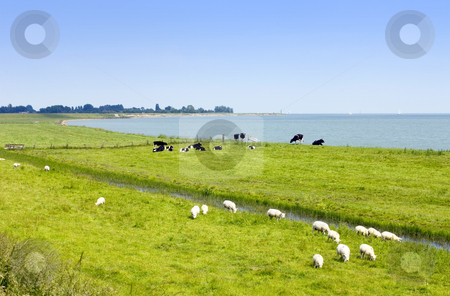 Summer in the River forelands stock photo, Summer in the Dutch Forelands on the shores of the IJsselmeer by Corepics VOF