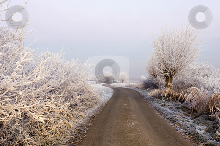 Winter road stock photo, The frosted trees and bushes along a country road in Zeeland, the Netherlands, partially lit by the highbeams of a car. Early morning. by Corepics VOF