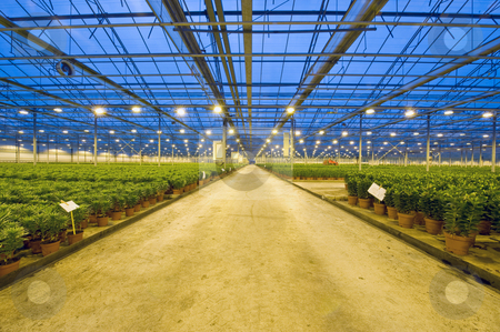 Glasshouse transport lane stock photo, A wide, concrete, transport lane in a huge glasshouse, with lilies by Corepics VOF
