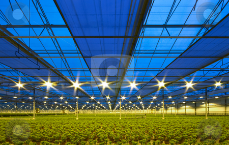 Glasshouse preparing for the night stock photo, Drapes drawn underneath the roof of a greenhouse in order to prepare for the night by Corepics VOF