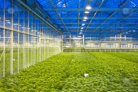 Glasshouse climate control stock photo, The tubes and valves, regulating the climate control of a horiticulture glasshouse, with various compartiments of lilies by Corepics VOF