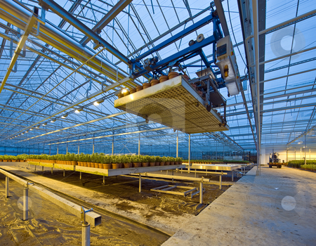 Glasshouse automation stock photo, A robotic pick and place unit in a tungsten lit glasshouse, arranging trays of lilies at dusk by Corepics VOF