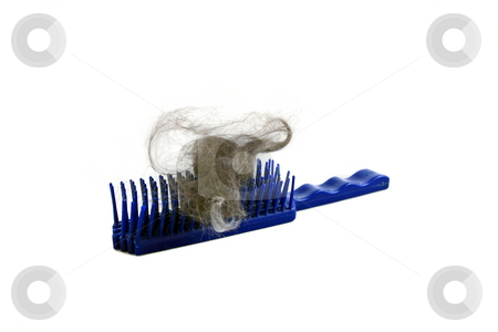 Pet Brush stock photo, Brush full of fur  helps you identify parasitic infestations such as fleas, ticks and tapeworms that can transmit disease to people by Jack Schiffer
