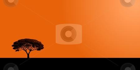 Tree stock photo, Single tree on a orange sunset background by Henrik Lehnerer