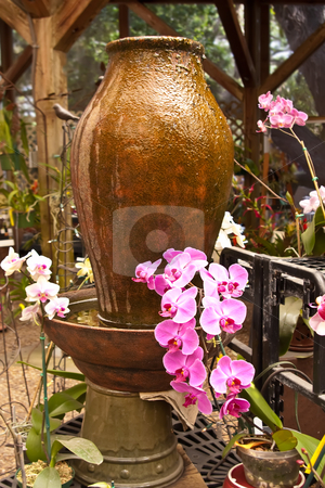 Pink and White Orchids in Garden stock photo, Pink and white orchids growing in garden next to jug water feature. by Steve Carroll