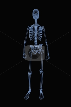 Standing Skeleton X-Ray stock photo, A CG skeleton standing in a casual pose for a full-body X-ray. by Allan Tooley