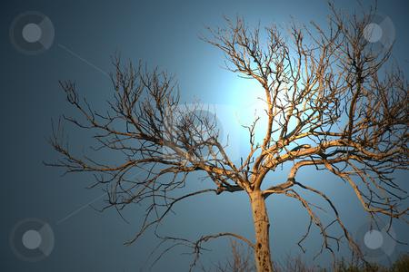 Spooky tree branch stock photo, Spooky tree branch in the lit night sky by Stacy Barnett