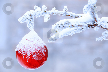 Christmas ball stock photo, Christmas golden ball on snowy new year tree outdoor by Julija Sapic