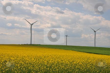 Field with rape and wind generator  stock photo,  by Zheko Zhekov