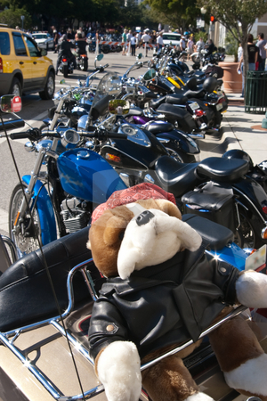 Biker Pooch stock photo, Stuffed dog on back of motorcyle at biker's rally in Sarasota, 