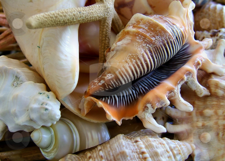 Shells stock photo, Close up of shells by Laura Smith