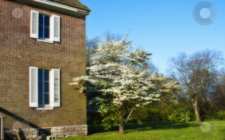 Landscape of Old Southern House stock photo, Landscape of old southern house with blue sky and flowering trees by Dennis Crumrin