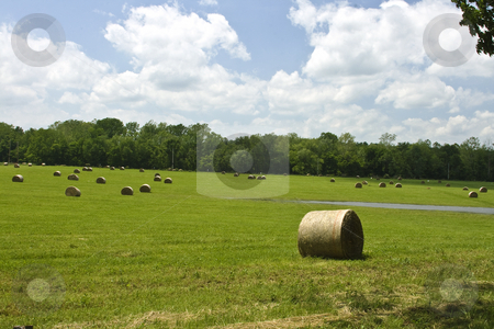 Landscape With Hay and Blue Sky stock photo, Hay field with round bales in country setting by Dennis Crumrin