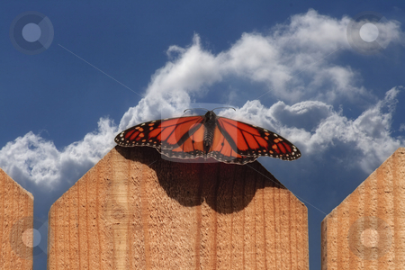 Monarch Butterfly on Fence stock photo, Monarch Butterfly on fence with blue cloudy sky by Dennis Crumrin