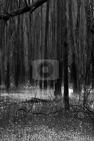 Swamp stock photo,  by Keith King