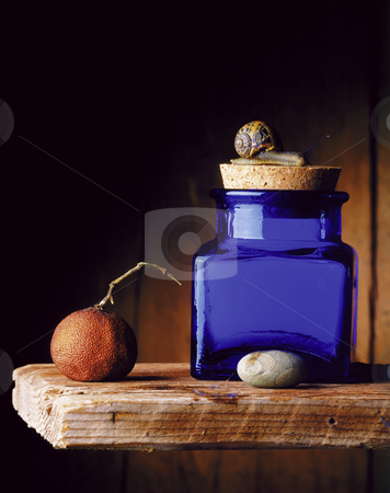 Blue jar and snail stock photo, Still life of a snail on blue jar, dried tangerine and  a small stone on a wooden shelf. by Noam Armonn