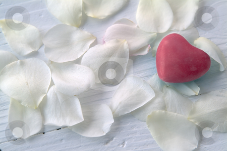 Heart on white rose petals stock photo, Red heart on white rose petals by Noam Armonn