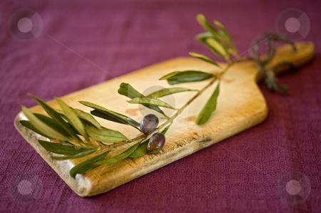 Olives stock photo, Close up on black olives on branch by Noam Armonn