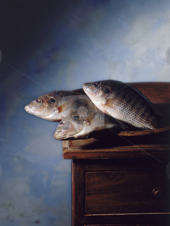 Renaissance stile fish stock photo, Three fish in a  Renaissance stile still ilfe, with blue background by Noam Armonn
