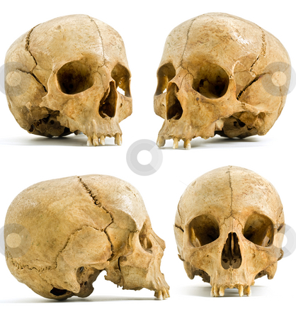 Human skull stock photo, Four angels of human skull isolated on white by Noam Armonn