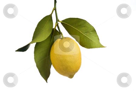 Lemon with leaves isolated stock photo, Lemon with leaves isolated on white by Noam Armonn
