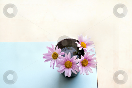 Pink daises stock photo, Four pink daises in a silver cup on an azure table by Noam Armonn