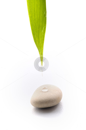 Zen background stock photo, Bamboo leav, water drop  and stone isolated on white by Noam Armonn