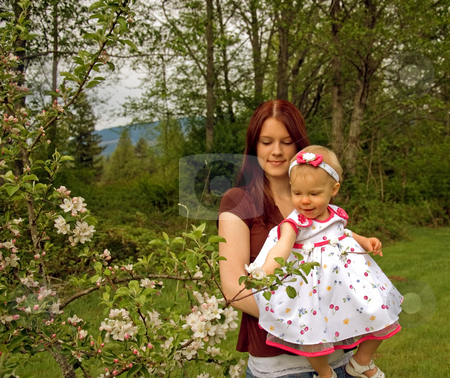 Attractive Mom and Toddler Looking at Apple Tree stock photo, This young mother and toddler daughter are looking at an apple tree in bloom. by Valerie Garner