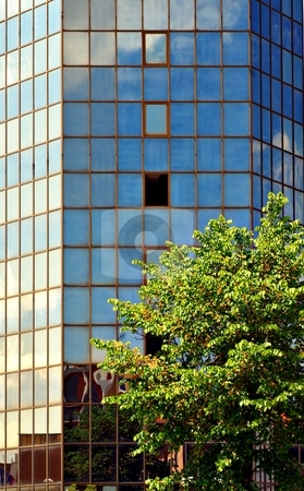 Sky on glass facade stock photo, Sky on glass facade of a tower and tree in foreground by Juraj Kovacik