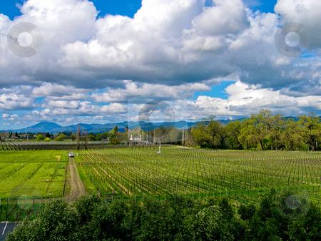 Vineyard and sky stock photo, Vineyard in Northern California by Jaime Pharr