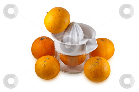 Real Oranges isolated on white stock photo, Pile of real oranges, fresh from tree with normal scares and defects, piled around a hand juicer.  Isolated on white background with clipping path. by Steve Carroll