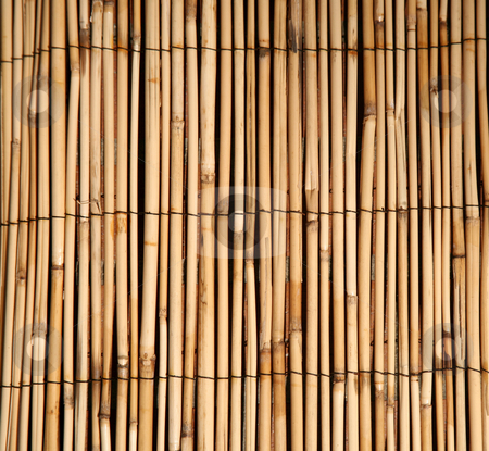 Bamboo pattern natural background stock photo, Rush or bamboo texture natural background by Stacy Barnett