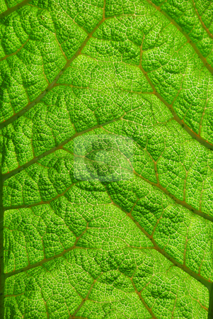 Fern Leaf Closeup Showing Texture stock photo, Fern leaf closeup showing texture with sunlight lighting it from the back. by Denis Radovanovic