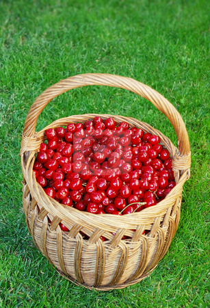 Bing cherries in basket stock photo, Bing cherries in wooden basket on the grass. by Ivan Paunovic