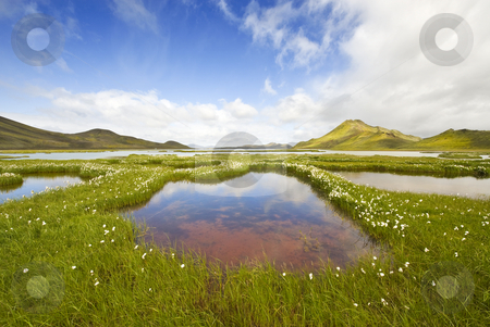Landmannarlaugar stock photo, The marsh landscape with wildflowers in Landmannarlaugar, Iceland by Corepics VOF